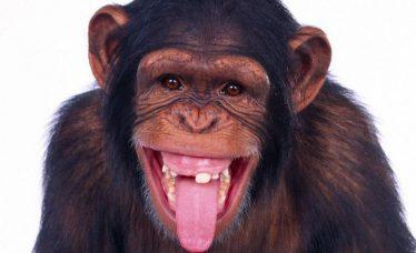 imagini-net-cu-maimute-1