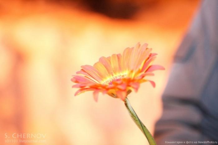 Влюбленные-цветы-и-апельсины-1-960x640