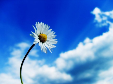 beautiful_sky_white_flower-standard_wallpapers