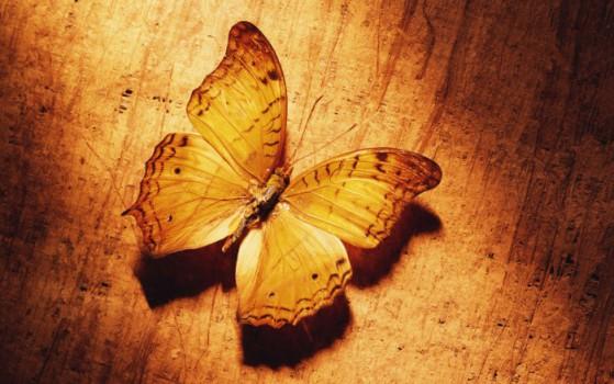 butterfly_wallpaper4001