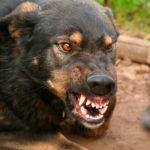 Mărturia unui creştin sirian care a fost dat spre mâncare câinilor. Câinii care trebuiau să îl sfâşie s-au îmblânzit…